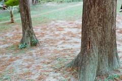 000373940017 (Nai.) Tags: expiredfilm lomographyiso100 colornegativefilm 135film pentaxmz3 slr naturalcolors plants green trees