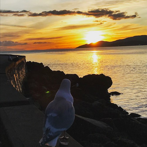 Seagull watches the sunset
