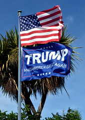 Trump (stephen trinder) Tags: stephentrinder stephentrinderphotography christchurch christchurchnewzealand aotearoa kiwi landscape trump donaldtrump unexpected usa american president outrage support shock flags banners starsandstripes republican