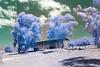 IMG_3053 tobacco shed. blue gum trees, bloukombome (francois f swanepoel) Tags: arch architecture argitektuur bloukombome bluegumtrees calitzdorp eucalyptus groenfontein groenfonteinvallei groenfonteinvalley infrared infrarooi landscape landskap noordkaap northerncape scenics southerncape swartskaap swartberge tabakskuur tobaccoshed