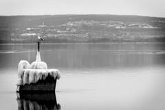 Ice on the Lake (agladshtein) Tags: tompkinscounty lighthouse cny winter nikond500 people nikkor200500 destination ny fingerlakes myerspointlight centralnewyork cayugalake newyork scenic camera snow ice frozen myerspark ithaca seagull landscape blackwhite bw