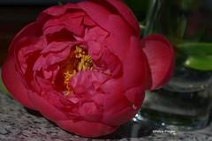 Flowers (Yoma29) Tags: blumen flowers blossom springtime frühling farbenpracht colourful closeup makro