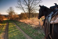 Wander the landscape (frantiekl) Tags: horse way footpath landsape evening nature happy animals wandering spring path friend western bohemia april countryside