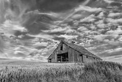 MG711 (NikonDigifan) Tags: bw blackandwhite palouse palousehills palousebarn barn wheat agriculture easternwashington washington farming niksoftware nikond750 silverefexpro mikegassphotography