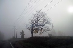 One Misty Morning (Haytham M.) Tags: outdoor outdoors poles wires country road countryroad street morning mist fog tree