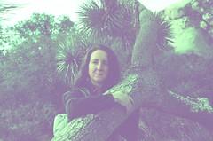 Kel & J Tree (that's keen) Tags: film slidefilm analog crossprocessing crossprocessed expiredfilm pentax pentaxspotmatic asahipentaxspotmatic kodakelitechrome joshuatree