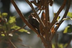 Colomos Forest photos - Tortola (Mister Molacho) Tags: macrophotography macro canon 70300 sigmalenses méxico mrmolacho