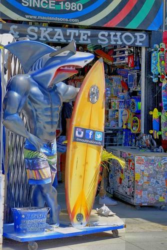 Sharkboarder_Scarinci_4-17