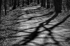 Shadow Road (mswan777) Tags: forest road shadow sun evening gravel woods tree michigan stevensville grand mere nikon d5100 sigma 70300mm monochrome landscape black white outdoor nature ansel
