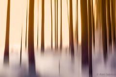 Fairytale forest 2 (petrisalonen) Tags: sunny sunset sunlight sunrise landscape forest silhuette silhouette trees slowshutterspeed slowshutter longexpo longexposure