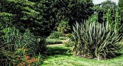 Calderstones Park Liverpool (Phil Longfoot Photography) Tags: landscape summer sunnyday grass hdr naturalbeauty merseyside landscapephoto naturephotography trees nature liverpool parks