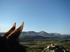 Through Horses Ears (GarethDaBell) Tags: horses horse riding ears through