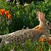 Bunny Spring