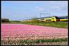 NSR-8633_Hil_22042017 (Dennis Koster) Tags: ns nsr trein personentrein passagierstrein hillegom bollenveld tulpen virm 8633