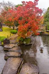 IMG_1655 (Evgeny Gorodetskiy) Tags: himeji maple foliage asia momiji leaves outdoor autumn rain japan park himejishi hyōgoken япония jp