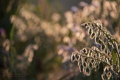 _MG_2361 (Chaguaceda Fotografias) Tags: contraluz atardecer sol luz luces naturaleza nature