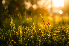 Good afternoon (yarn.spinner) Tags: afternoon gold light plant flower april sunlight bokeh red green warmth dof nature
