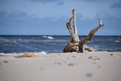 nature on the beach (navarrodave80) Tags: beach root sand sea blues sky baltic poland polarize polarizefilter nikon d3300