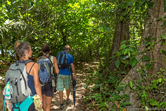 13. Cahuita, Costa Rica-34.jpg (gaillard.galopere) Tags: 2017 5d 5dmkiii apn america amérique animaux cr cri canon continentsetpays costarica couleur ef eos g11 mkiii nature travel vegetations voyage ameriquecentrale amériquecentrale arboles arbre arbres cahuita canonphotography centralamerica centroamerica color colorful compact forest foret forêt hood ovelanding overland overlander powershot sauvage traveler tree trees végétation wild wood