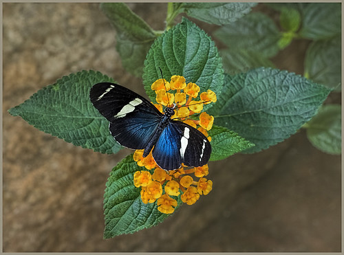 Lovely Butterfly by Marcia Nye - Class A Digital Honorable Mention - March 2017