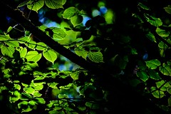 Deep Green Forest (Jelena. T) Tags: trees green forest tree moody deep minimal nature outdoors linden leaves leaf shade sun light blue woods diagonal brunches solitude calmness fresh spring breeze air airy life joy