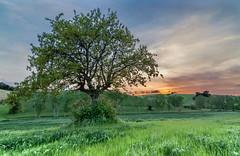 Lonely tree (stefanogrechi) Tags: landscape paesaggio natura nature sunset tramonto nuvole clouds lunga esposizione long exposition tree albero vento wind