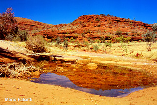 Australia: NorthernTerritory: Central Australia: Western Mac Donnell: Finke Gorge  NP