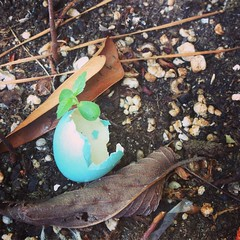 Hatched (~jeannie~) Tags: spring blue eggshell hatched robinegg