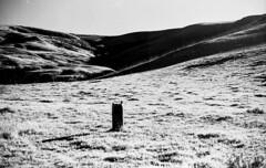 Solitary stump in the shadow hills of San Luis Obispo (carlfieler) Tags: canona1 50mmlens monochrome film analog blackandwhite hills rollei25 shadows sanluisobispo california landscape