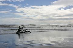 Between sea and sky (Karen Pincott) Tags: newzealand sea sky clouds autumn sunny treebranch driftwood foxtonbeach reflections foxton