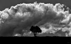 Essenzialismo (Danilo Mazzanti) Tags: danilo danilomazzanti mazzanti wwwdanilomazzantiit fotografia foto fotografo photos photography natura albero biancoenero blackandwhite nubi composizione drammatico