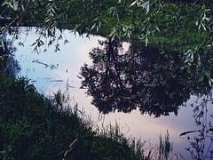 (ctjasa) Tags: nature reflection river stream sky