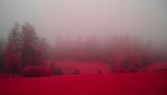 Pink by the Pond (oldoinyo) Tags: fog mist nebel trees landscape rural northcarolina summer morning infrared