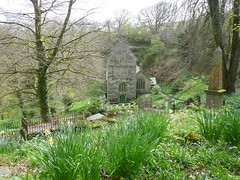 Cornwall, Boscastle, Minster, St. Merthiana's Church and Daffodils (paulineandjohng2008) Tags: church cornwall boscastle stmerthianas