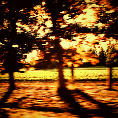 Summer, Smeared (keri_friedman) Tags: trees motion blur window nature car mobile oregon portland island fast samsung move galaxy photoaday pacificnorthwest pdx 365 vignette android magichour goldenhour sauvieisland sauvie samsungalaxy