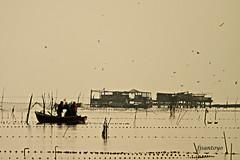 Amanece en la encaizada (fjsantoyo) Tags: contraluz amanecer marmenor pesca encaizada