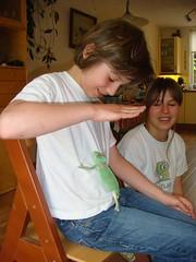 Kameleon op je kinderfeestje | Exotus Serpenti