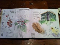 Neighborhood living room (MadeleineSchineis) Tags: chicken garden watercolor sketch berries feather madeleine mop
