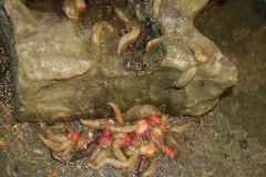 everyone likes strawberries! (yorkieb0y) Tags: strawberries slime slugs