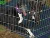 GreyhoundPlanetDay2008059