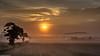 Morning glory. (AlbOst) Tags: trees sunrise theworldwelivein abigfave slicesoftime inspiringcreativeminds