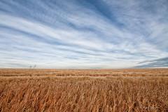 Alberta Sky (Keeperofthezoo) Tags: autumn sky canada calgary field grass clouds rural landscape farm seasonal overcast farmland alberta bigsky prairie agriculture agricultural