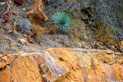 Sequoia National Park (Edi Bähler) Tags: california usa plant tree unitedstates familie pflanze ferien baum sequoianationalpark kalifornien baumstamm vereinigtestaaten 80400mmf4556 nikond3