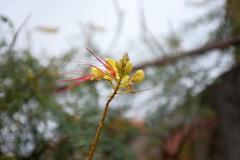 Red and yellow (akk_rus) Tags: flowers flower nature nikon europe bulgaria 28 nikkor d800    3570  tsarevo  nikkor357028   nikond800