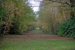 An Avenue Of Trees At Tilgate Park, Crawley, West Sussex, England, Uk (PANDOOZY PHOTOS) Tags: park uk trees england west leaves forest sussex britain great row rows avenue autumnal tilgate glade crawley