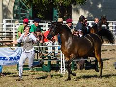 2009-05-09_018 Montevideo (mike.bulter) Tags: horse pferd animal tier lafiestadelcaballo expootoño2009 expoprado messe montevideo prado ruraldelprado uruguay gkzhssrfryzq2mjha3d2