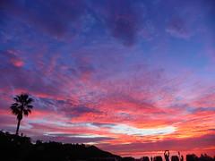Encinitas Sunset (h2osurfphotos.com) Tags: california sunset west silhouette cali america unitedstates sandiego sunsets palmtree southerncalifornia pinksunset encinitas moonlightbeach northcounty westernsky jimloeb h2oexpress