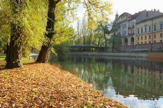La rivière Criș Repede, Oradea