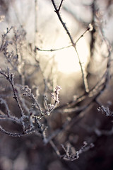 Light it up (Pics by Abigail) Tags: morning winter light sunlight snow cold ice nature canon dark morninglight frost shadows bokeh snowy branches frosty 50mm14 icy twigs wintermorning