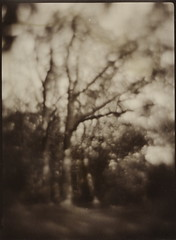 (NooFZz) Tags: bw landscape monocle 9x12 photographicpaper paperpositive bulldog4x5
